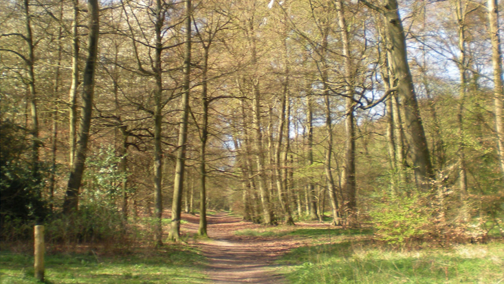 Angling Spring Wood, Great Missenden