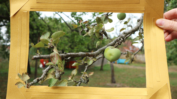 Framing an image of an apple tree