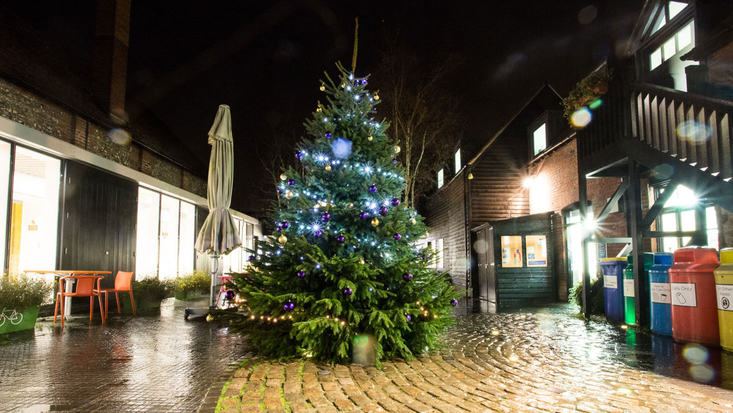 Christmas tree in the courtyard
